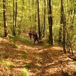 Sfeer - Bohan ~ Les Dolimarts (Namen) 12-10-2019 ©Steve Wullaert