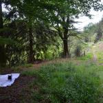 Sfeer - Lanzerath ~ Vallée de l'Our - Ravel (Luik) 18-07-2020 ©Steve Wullaert