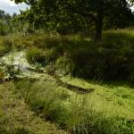 Sfeer - Neerpelt ~ Het Hageven (Limburg) - 05-09-2020 ©Steve Wullaert