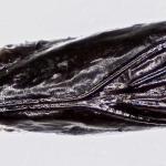 Mompha epilobiella - Gewone wilgenroosjesmot