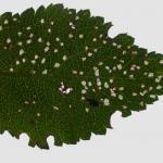 Coleophora anatipenella - Witte meidoornkokermot