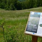 Sfeer - Andenne ~ Réserve naturelle de Sclaigneaux (Luik) 13-06-2021 ©Steve Wullaert