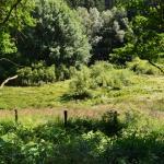 Sfeer - Rocherath ~ Vallée de la Holzwarche (Luik) 18-07-2021 ©Steve Wullaert